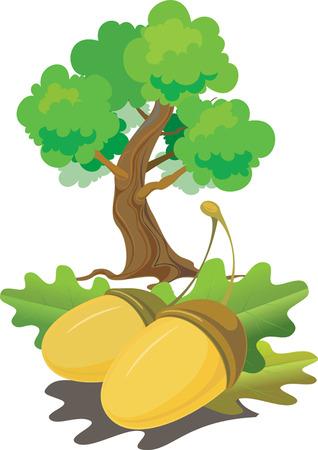 The acorns lying on leaves, under an oak. vector. illustration