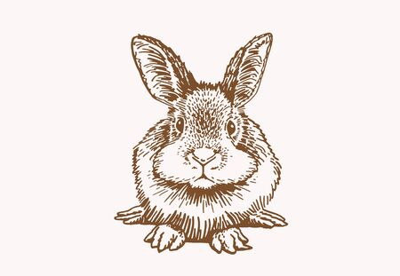 Graphical sepia sketch of bunny, illustration