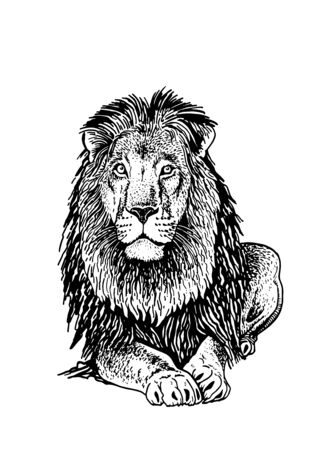 Graphical sketch of lion isolated on white background, illustration Vektorové ilustrace