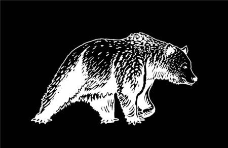 Graphical sketch of grizzly bear isolated on black background, vector engraved illustration