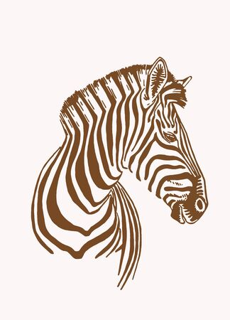 Graphical portrait of zebra, vector sepia illustration 矢量图像