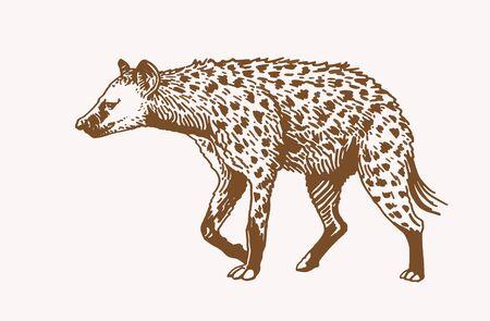 Graphical hyena, vector sepia illustration