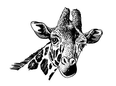 Graphical portrait of giraffe isolated on white background, vector illustration Ilustrace
