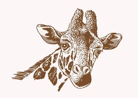 Graphical portrait of giraffe, vector sepia illustration