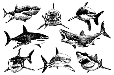 Graphical hand-drawn set of sharks isolated on white background, vector illustration Illustration