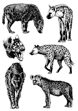 Graphical set of hyenas isolated on white background, vector illustration