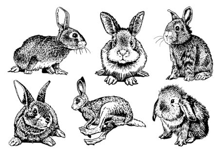 Graphical set of bunnies isolated on white background, vector illustration