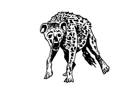 Graphical hyena isolated on white background, vector illustration