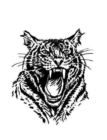 Graphical portrait of tiger isolated on white background, vector illustration, wild animal  イラスト・ベクター素材