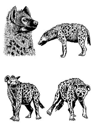 Graphical set of hyenas isolated on white background, vector illustration Ilustración de vector