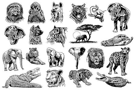 Graphical set of African animals isolated on white background, vector elements