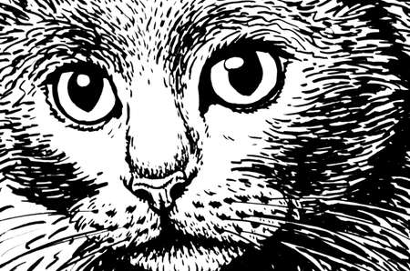 Close up graphical illustration of cats portrait, illustration for coloring and typography