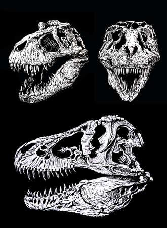 Graphical set of skulls of tyranosauruses isolated on black background,vector illustration