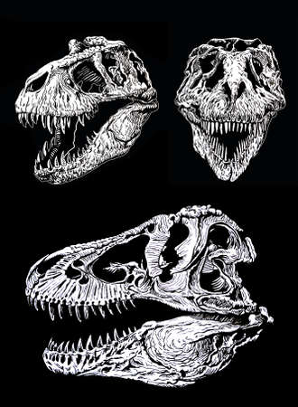 Graphical set of skulls of tyranosauruses isolated on black background,vector illustration