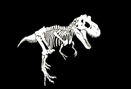 Graphical skeleton of tyranosaurus isolated on black background,vector engraved illustration, paleontology