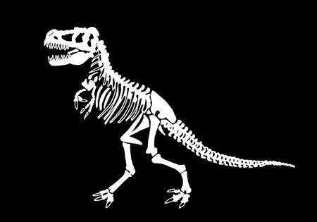 Graphical skeleton of tyrannosaurus isolated on black background,vector illustration ,fossils