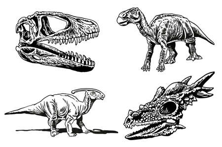 Vector set of dinosaur skeletons and skulls on white background,paleontological collection