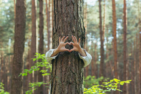 hands of a young woman hug a tree in the forest and show a sign of heart and love for nature