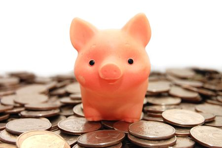 small pig sits on coins photo