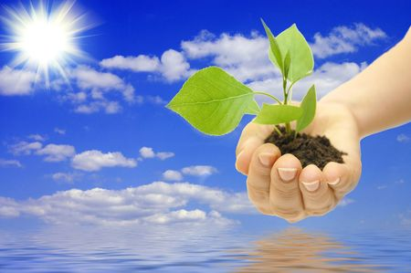 replant: plant in hand on blue sky background with white clouds
