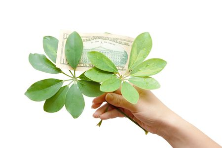 greenbacks: The female hand holds leaves and dollar