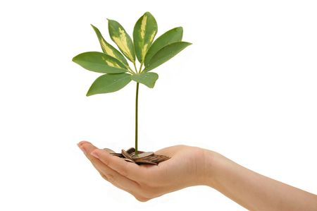 Give: plant and coins in hand on white background