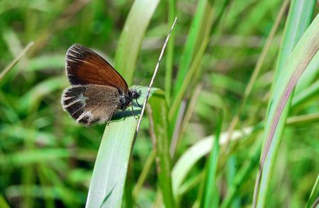 The beautiful butterfly against a green grass photo