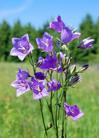 Violet flowers against a green grass Stock Photo - 5138506