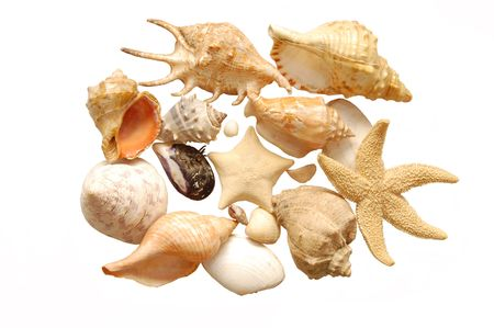 set of seashells on white background photo