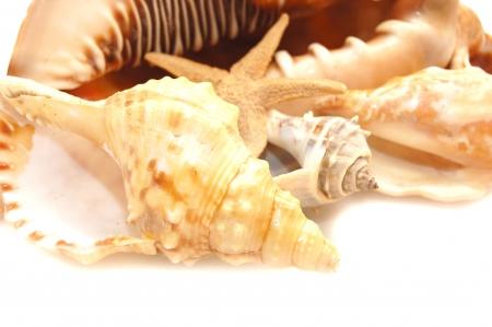 photo of a variety of seashells  Stock Photo - 5258153