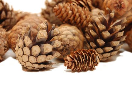 Composition from several fir cones  Stock Photo - 5303607