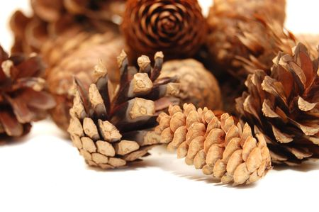 Composition from several fir cones  Stock Photo - 5303603