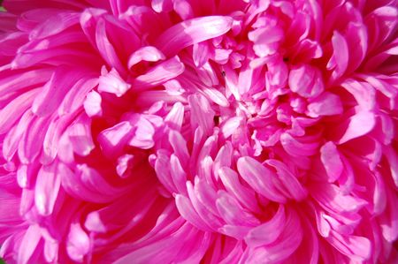 Close-up of colourful purple and pink aster photo