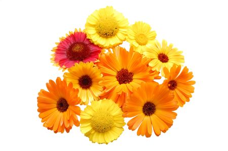 Flowers with yellow petals on a white background photo