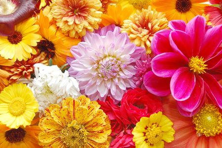 multi colored  flowers pattern background photo