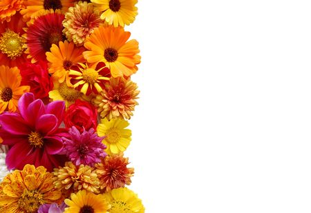 Beautiful border from fresh flowers on a white background photo