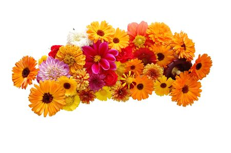 chrysanthemums: Flowers with petals of various colours on a white background