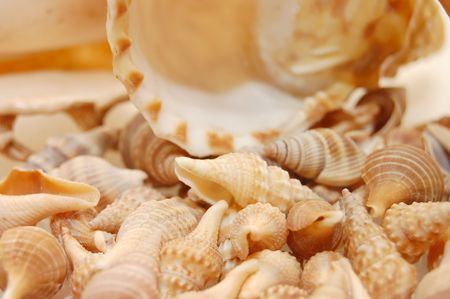 seashell background with various kinds of shells   photo