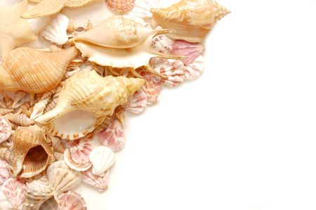 helix border: Different shells isolated on a white background