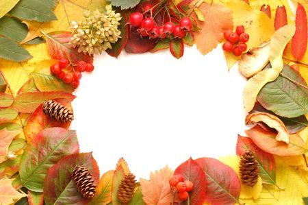 autumn fall leaf frame background   photo