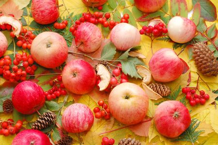 Crop of apples against autumn leaves photo