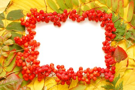 frame made of rowan berries isolated on white photo