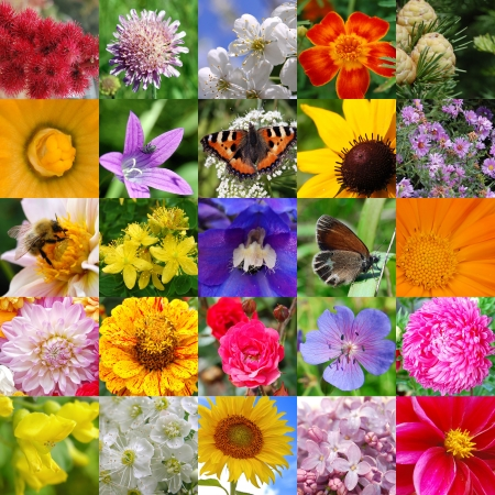 Colourful collage from beautiful colours photo