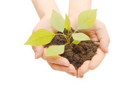 Female hands with a plant  isolated Stock Photo - 6044500