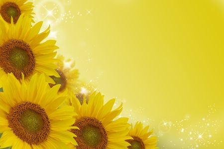 Yellow sunflowers on a colour background photo