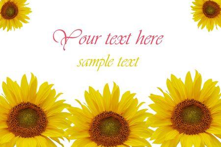 Yellow sunflowers isolated on white background Stock Photo