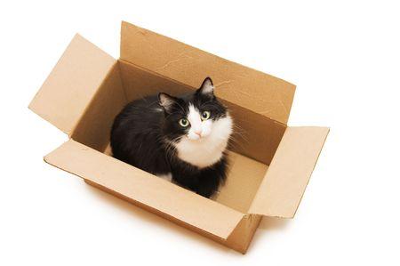boite carton: Un joli chat noir dans la bo�te en carton  Banque d'images