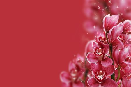Beautiful branch of a fresh orchid  Stock Photo - 6629440