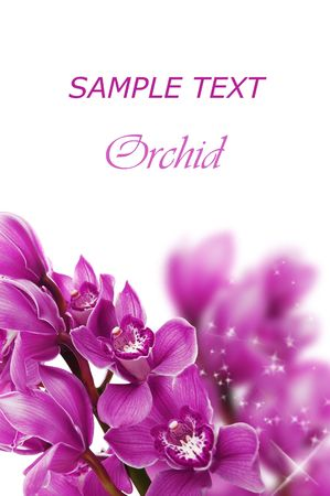 lilac flowers: Beautiful branch of a fresh orchid  Stock Photo