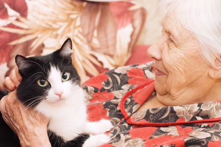 The grandmother with a cat on a sofa   photo